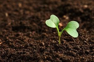 Projeto desenvolvido pela Fazenda deve beneficiar 300 mil produtores em todo o Estado - Foto: Divulgação